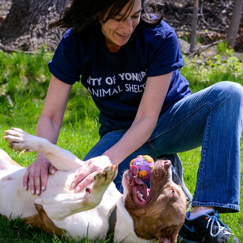 Yonkers Animal Shelter